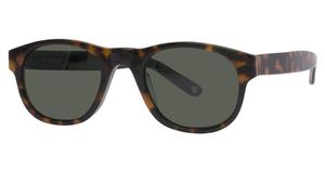 Avalon Eyewear 5503 Tortoise