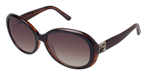 Ann Taylor AT0813 Tortoise