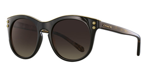 Coach HC8190 Sunglasses