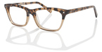 ECO LOS ANGELES Tortoise Brown